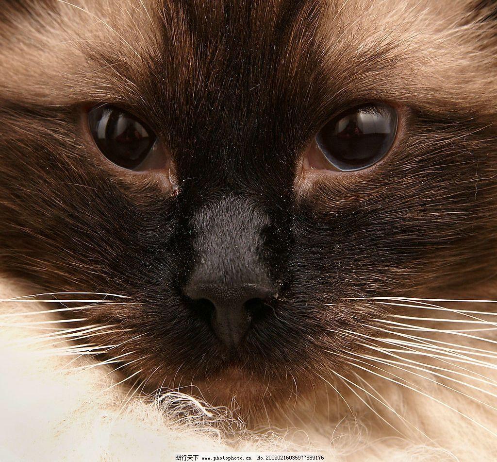猫脸特写图片