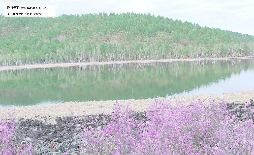 绿映 森林 山 湖水 河水 倒影 花 树林 大兴安岭 美景 风景画 自然
