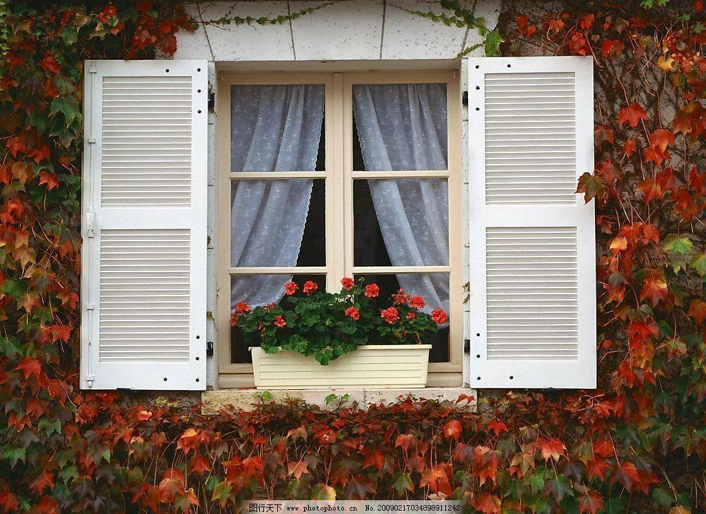 外窗绿化 窗外风景 窗 玻璃 窗帘 花 植物 盆栽 花滕 自然景观 自然
