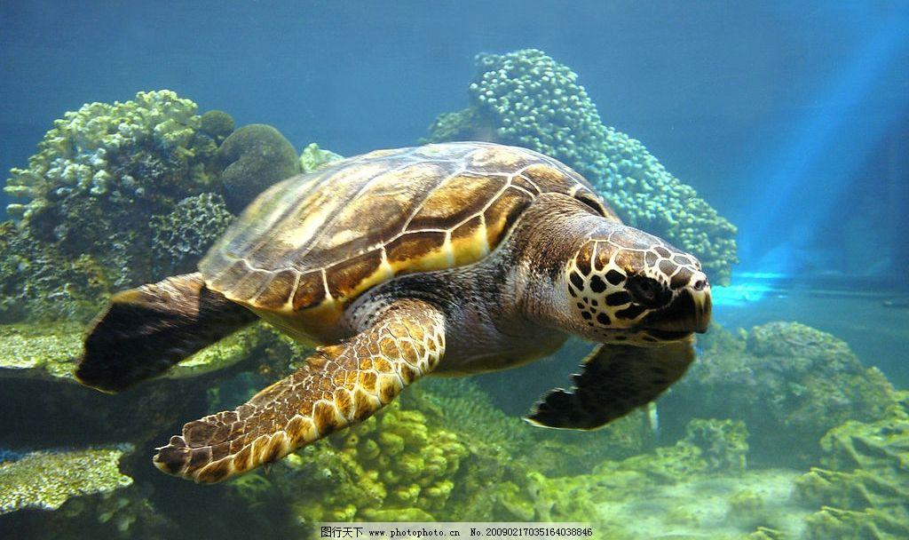 海龟 动物 海底世界 海洋 海水 珊瑚 光线 精美图片 印刷适用