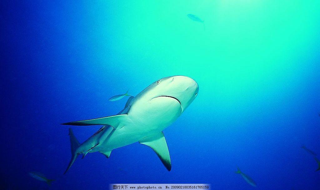鲨鱼 海底世界 海底动物 鱼 生物世界 海洋生物 摄影图库 72dpi jpg