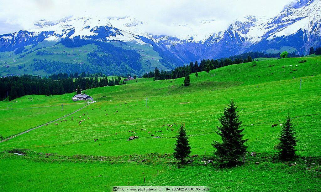自然风光 雪山 草原 树林 山脉 小房子 自然景观 自然风景 摄影图库 7