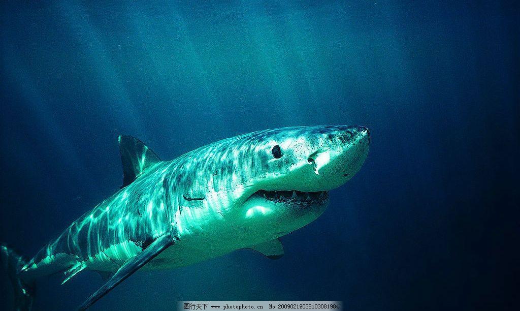 鲨鱼 海底世界 海底动物 海洋 摄影图库