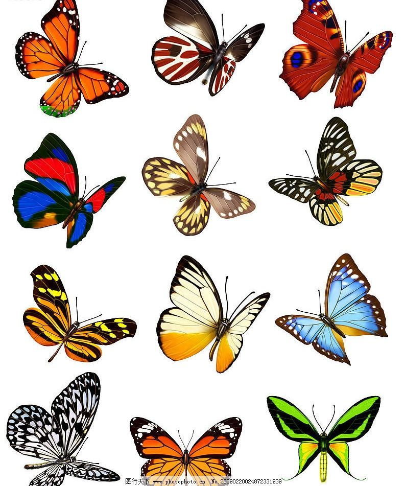 蝴蝶 动漫动画 动漫人物 设计图库 300dpi jpg 生物世界 昆虫