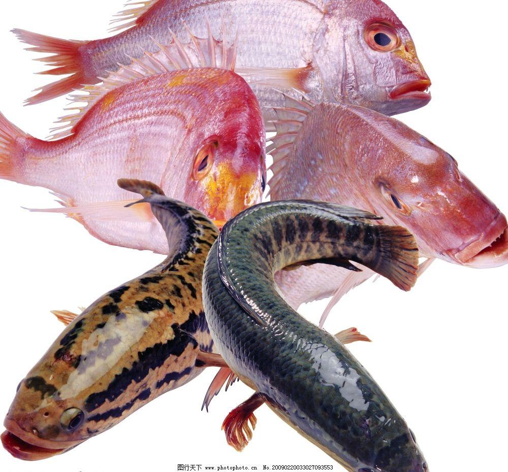 食材海鲜 鱼 海鱼 花鱼 海鲜 餐饮美食 食物原料 食材 海鲜食材 餐食