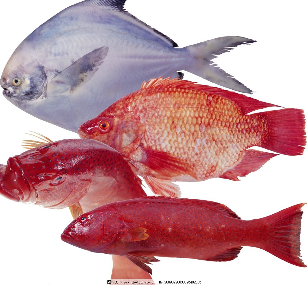 食材海鲜 鱼 海鱼 花鱼 餐饮美食 食物原料 海鲜食材 餐食材料