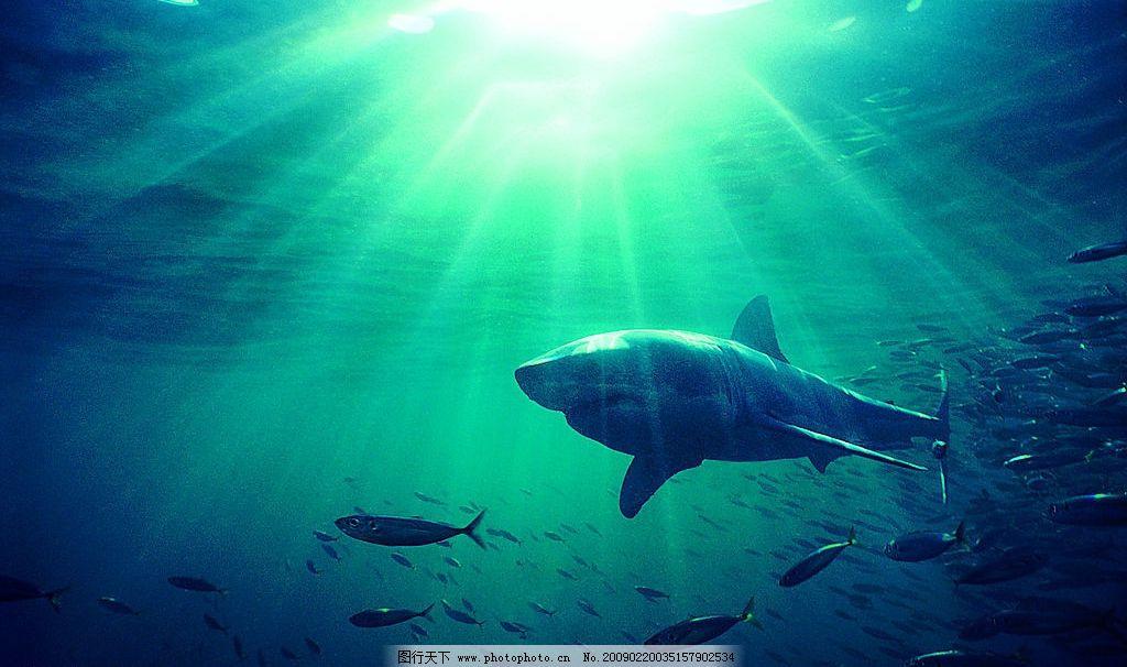 海底动物 海洋