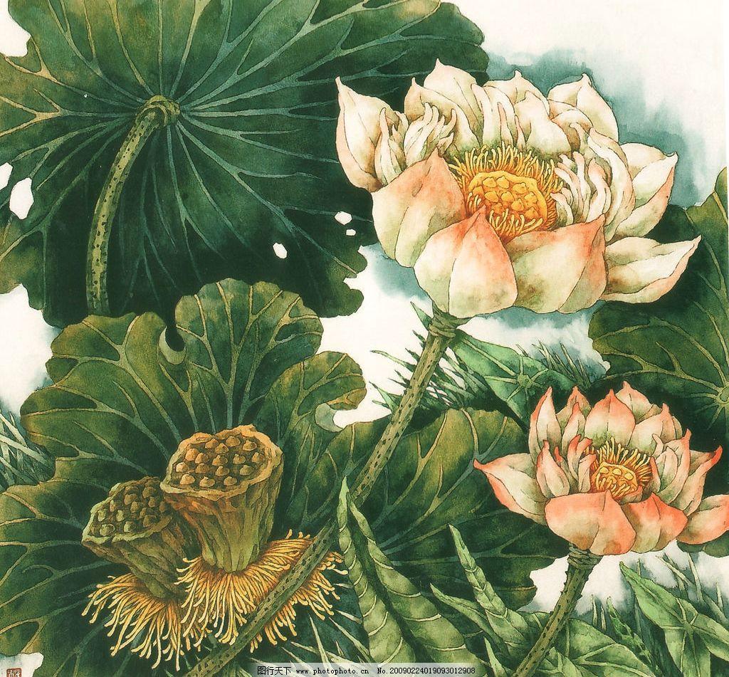 荷花 国画 工笔画 荷叶 莲蓬 兰草 文化艺术 绘画书法 设计图库 300
