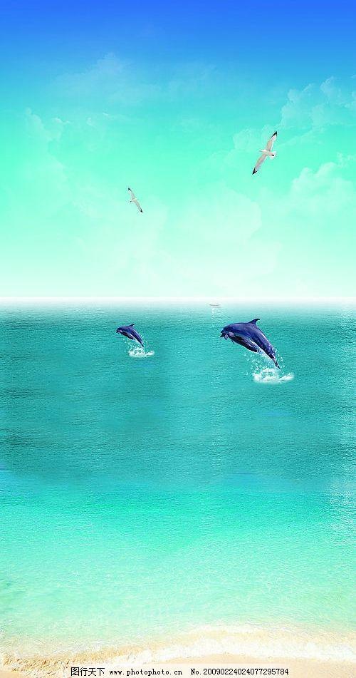 海豚大海 海洋 海岸 浪花 海鸥 鸟 蓝天 晴空万里