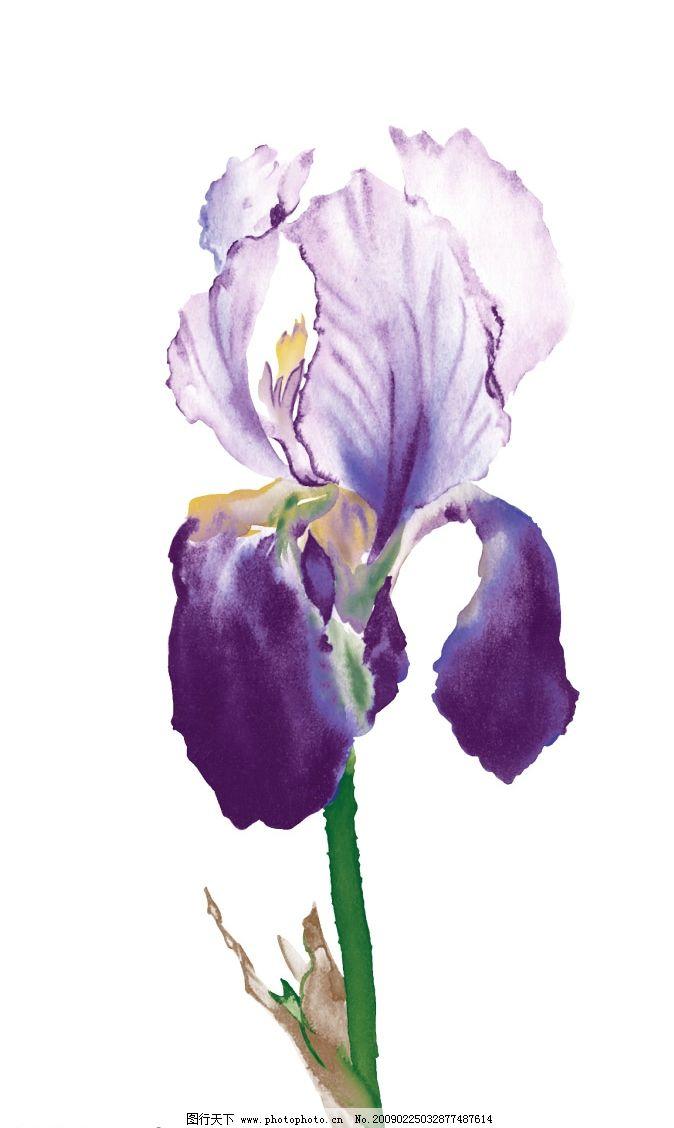 紫罗兰 紫色 水墨效果 单独一朵 psd分层素材 风景 源文件库 300dpi