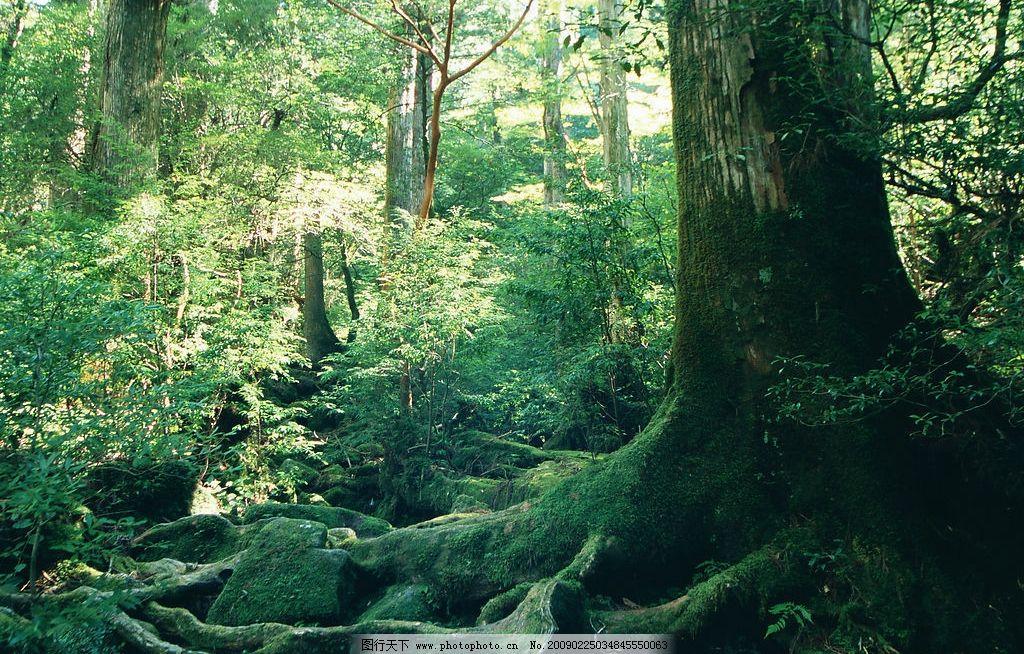 阳光森林 富尔特 素材辞典 树 绿色 自然景观 自然风景 摄影图库