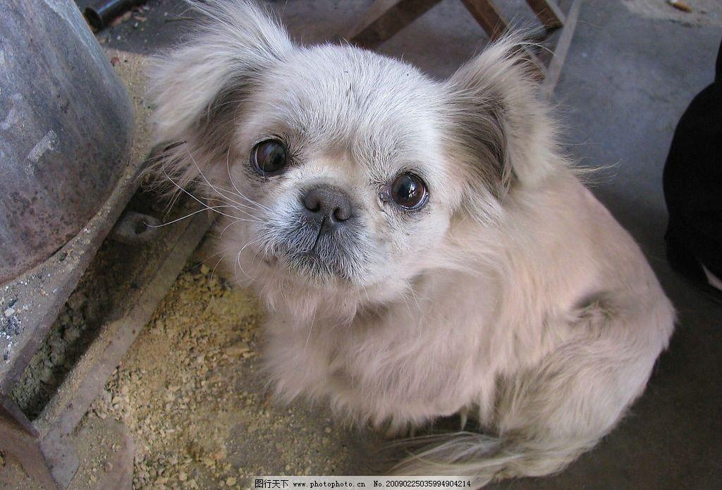 可爱的小狗 动物 宠物 风景 摄影图库
