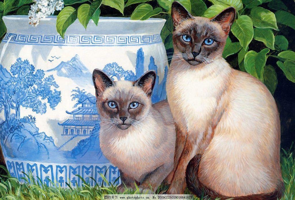 手绘猫咪 手绘动物 动物