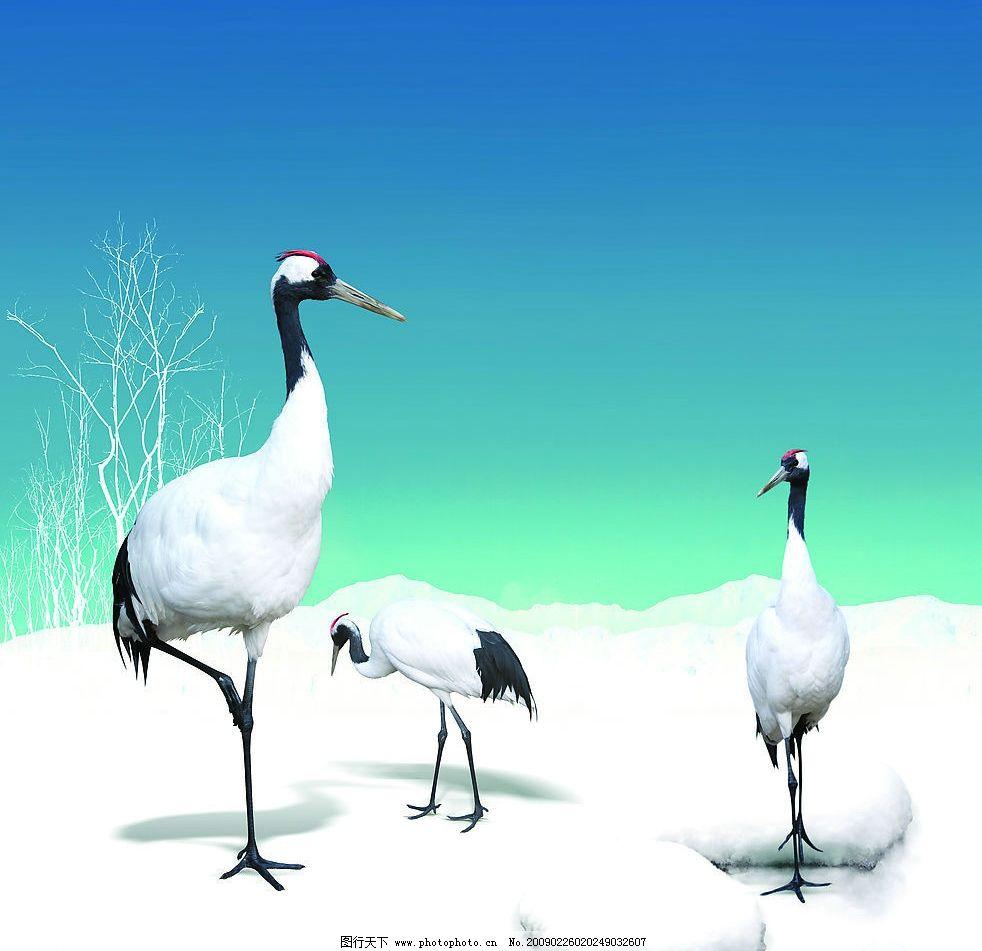 仙鹤 移门 雪地 树木 冬天 动物 鸟 其他 图片素材