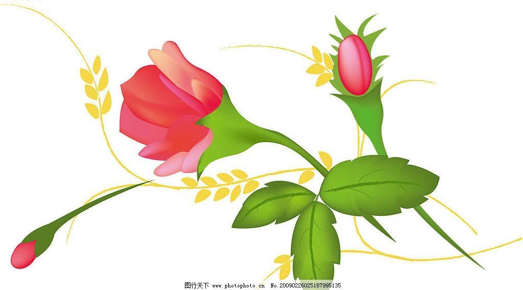 花的生物结构模式图