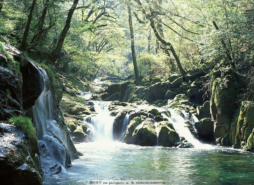 小溪 森林 阳光 清泉 树木 明亮 自然景观 山水风景 摄影图库 350dpi