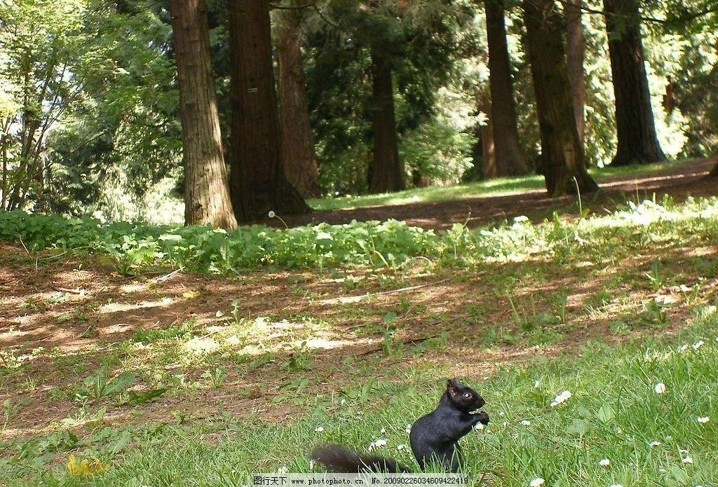 树林里的动物图片
