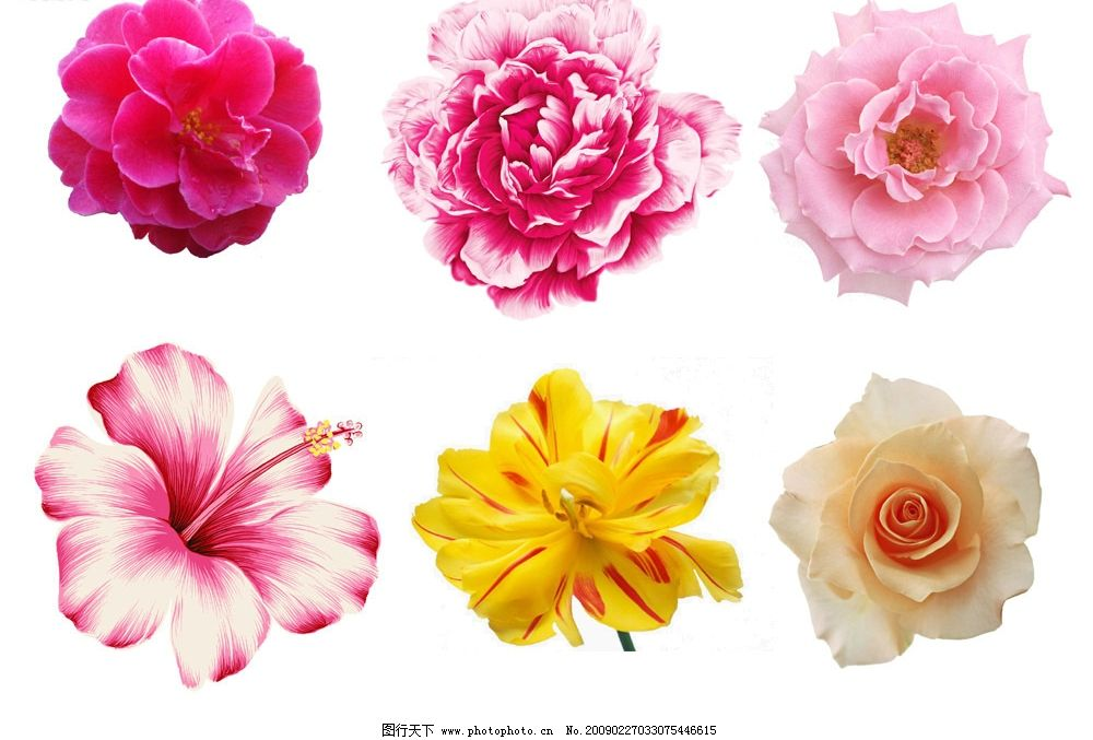 花朵 花 高清晰 鲜花 psd分层素材 源文件库 72dpi psd