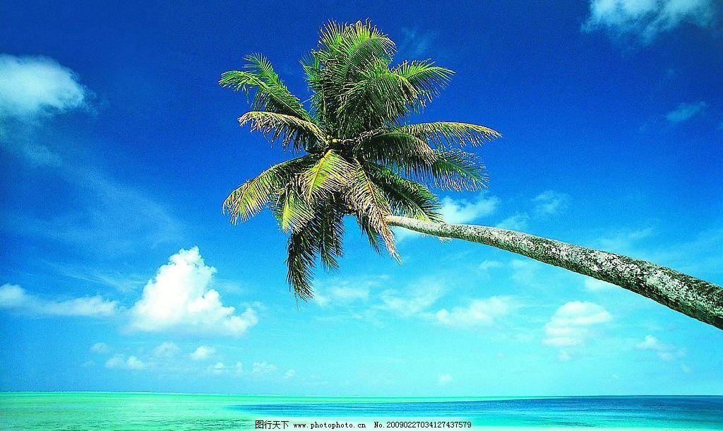 海滩 沙滩 大海 海边 椰树 风景 旅游摄影 自然风景 摄影图库 72dpi