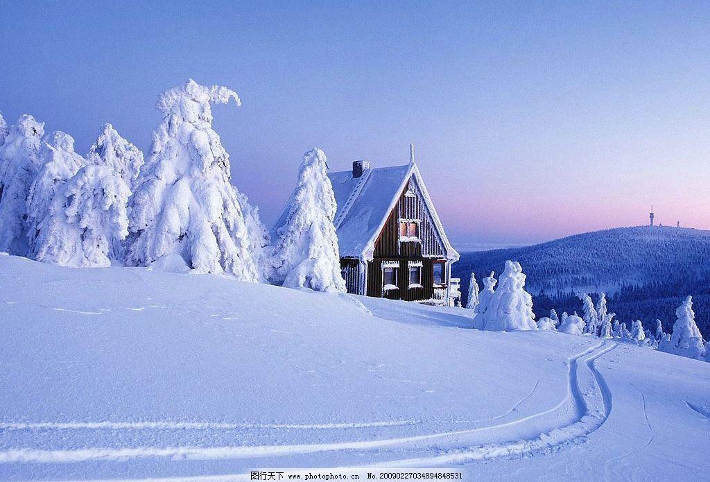 蓝天雪松和海水图片
