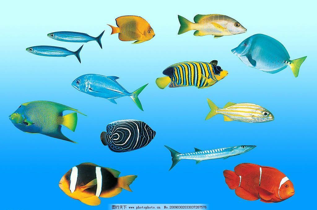 海底鱼类 鱼 海鱼 观赏鱼 海洋鱼 psd分层素材 源文件库 300dpi psd