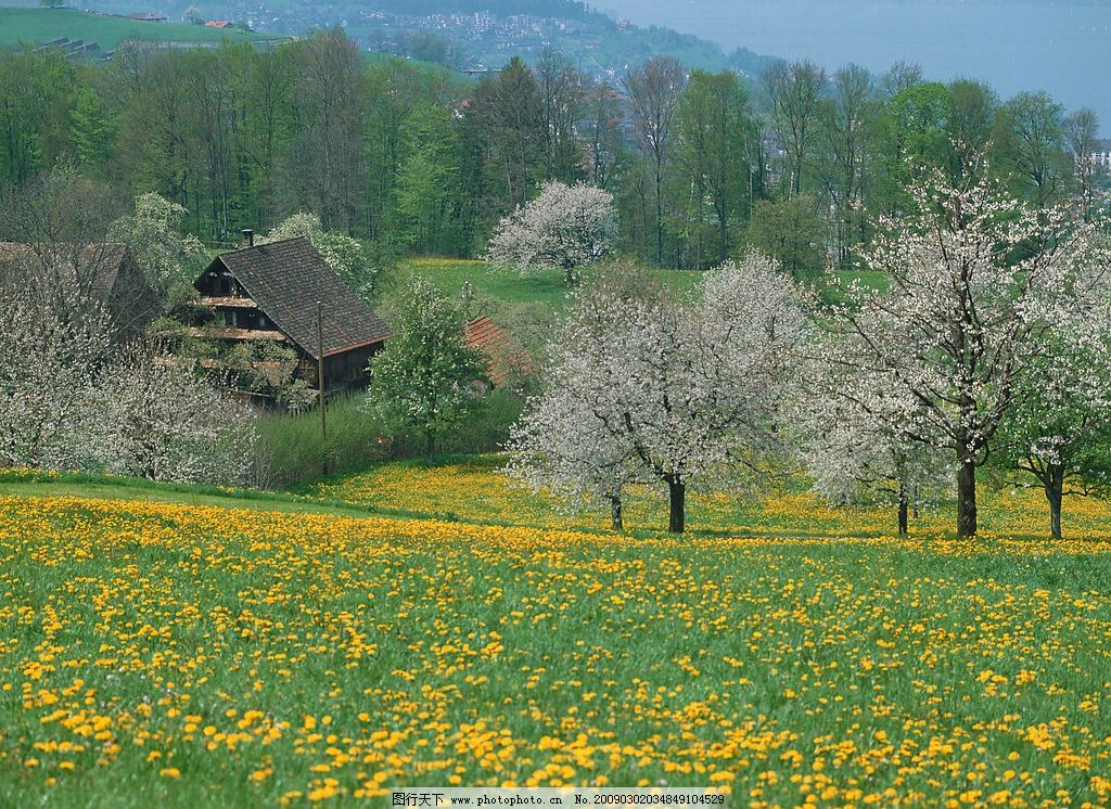 欧洲风景 森林 树林 房子 草坪 黄花 旅游摄影 国外旅游 摄影图库