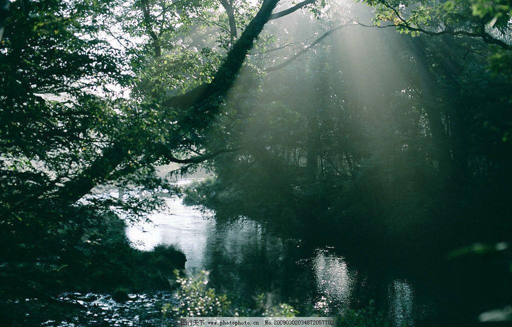 阳光森林 富尔特 素材辞典 森林 树 自然景观 自然风景 摄影图库 350