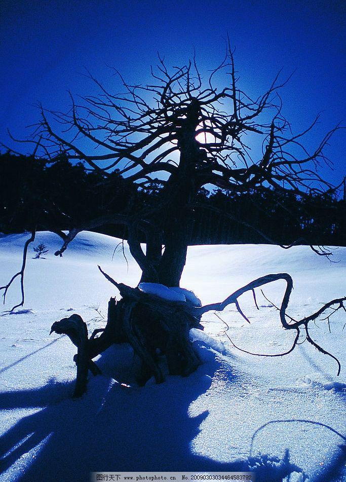 冬日阳光 太阳 雪地 枯树 自然景观 山水风景 摄影图库 350dpi jpg