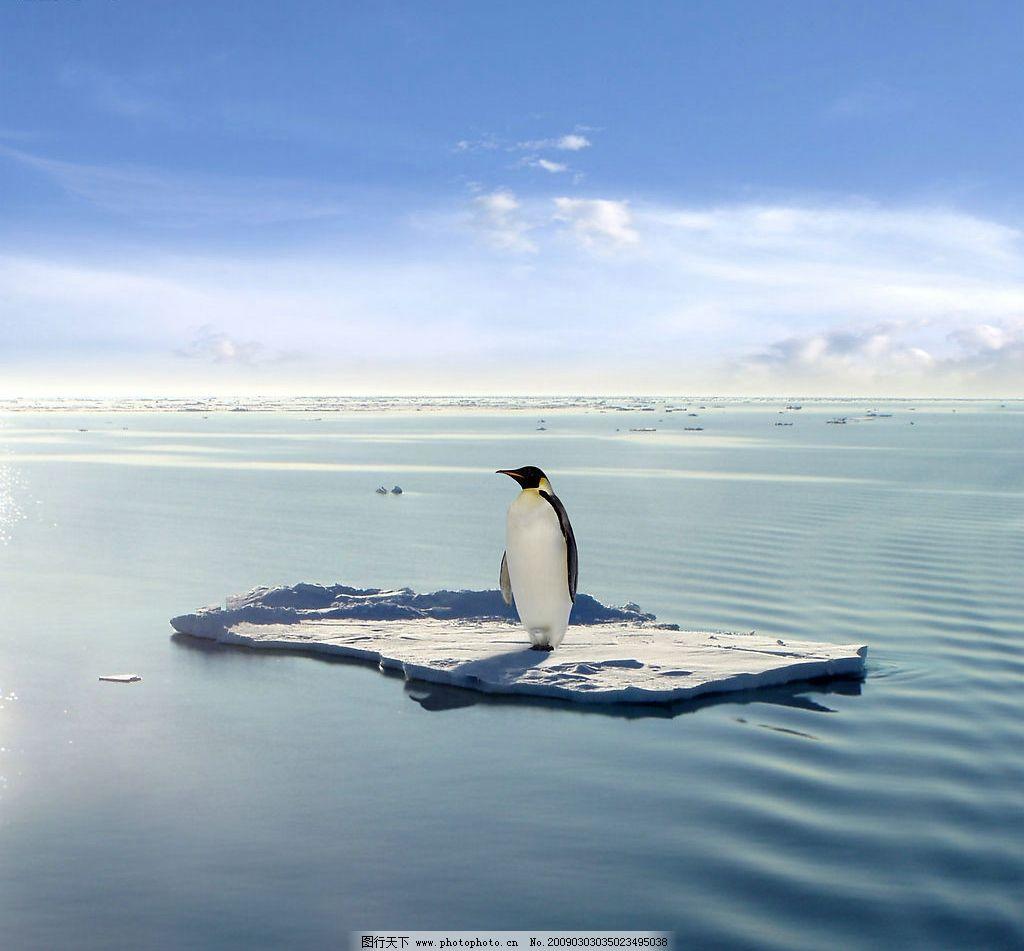 孤独的企鹅 南极 北极 冰天雪地 动物 实用图片 摄影图库
