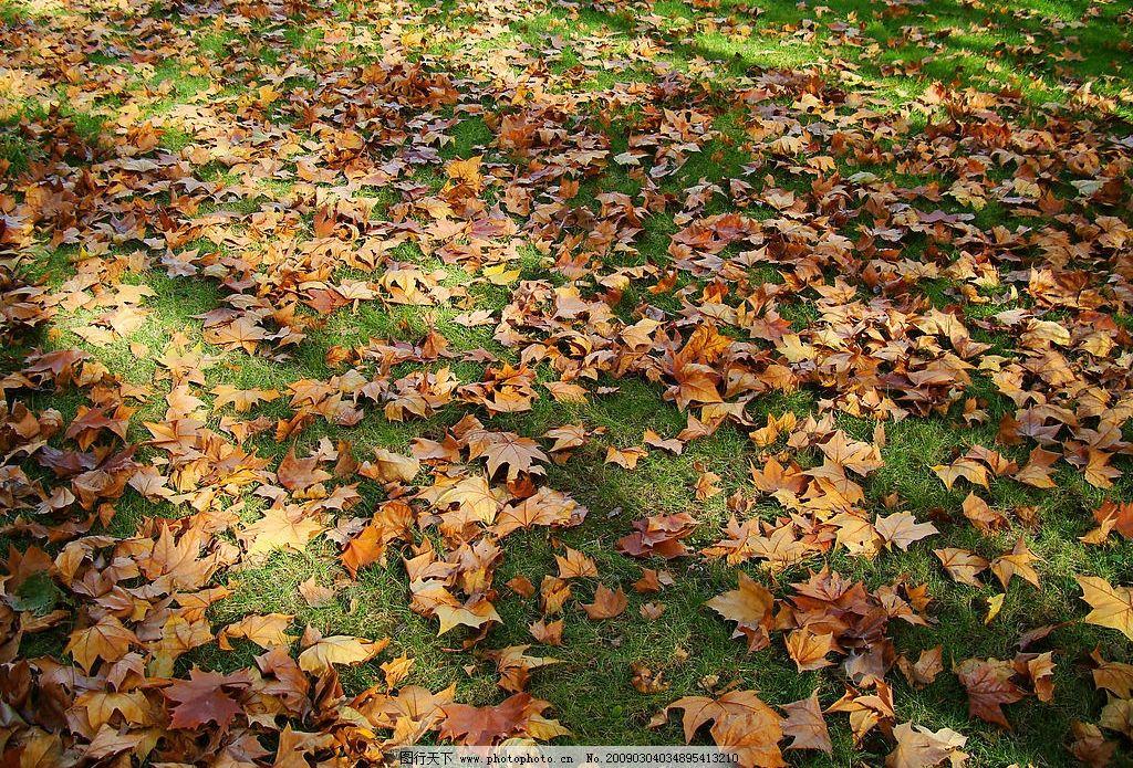 秋天满地落叶图片