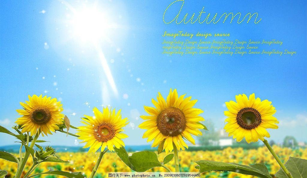 太阳花 太阳 天空 阳光 花 阳光明媚 psd分层素材 风景 源文件库 300