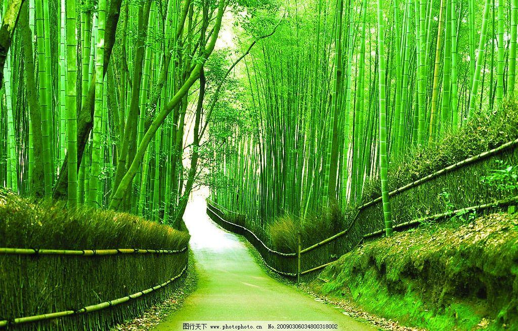 竹林图片,小路 美好的绿景 自然景观 自然风景 摄影