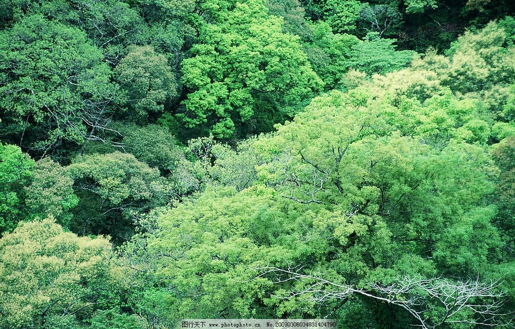 阳光森林 富尔特 素材辞典 森林 树 绿色 自然景观 自然风景 摄影图库