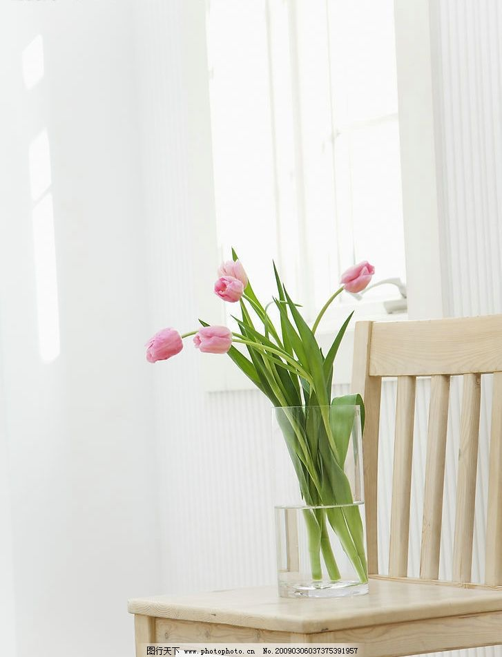 静物 富尔特素材辞典 花瓶 水 阳光 花 窗台 家居 木椅 绿叶 生活百科