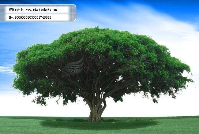 一棵大树 蓝天 白云 psd分层源文件