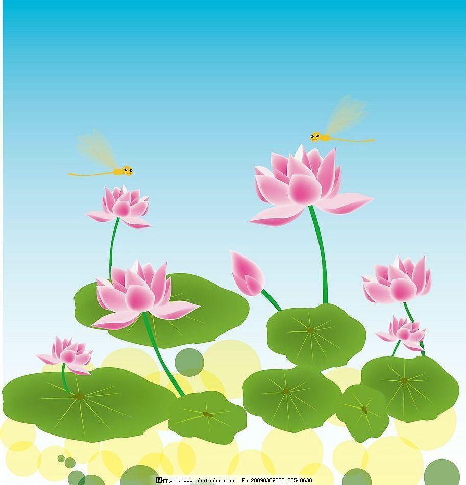 荷 荷花 荷叶 蜻蜓 圆 花 背景      素材 底纹 自然景观 自然风景