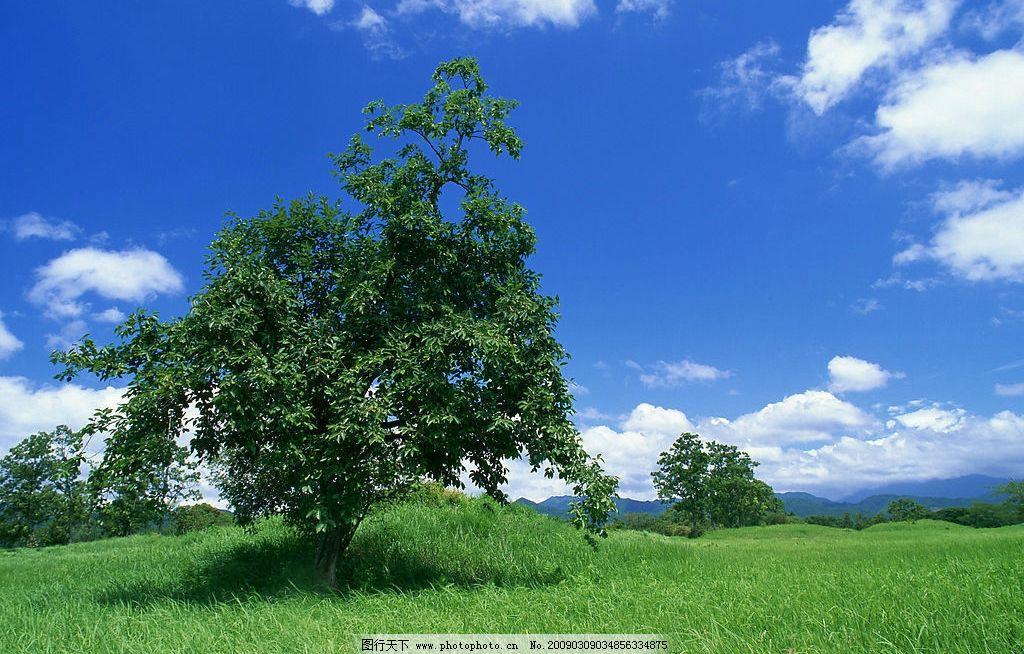 蓝天白云森林草地图片