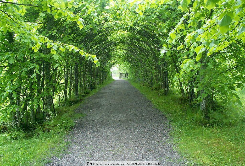 林荫小道 清新的空气 植物 绿色 自然景观 自然风景 摄影图库 72dpi