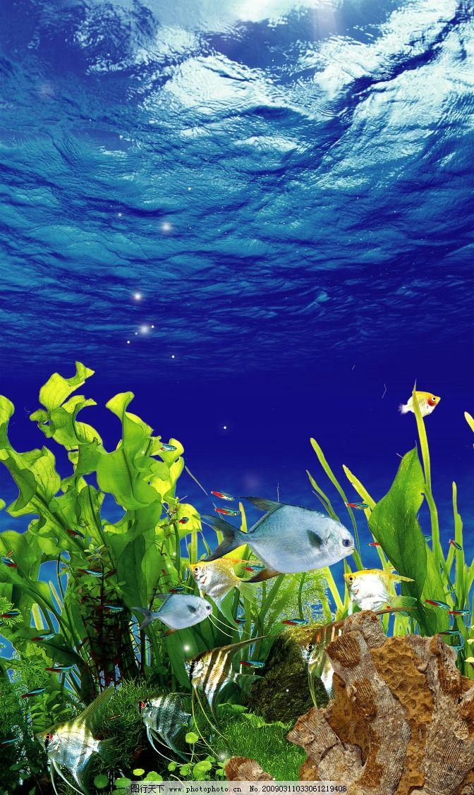 展板生物世界 海洋野生动物 海底城市 奇幻世界 海藻 珊瑚礁 海底岩石