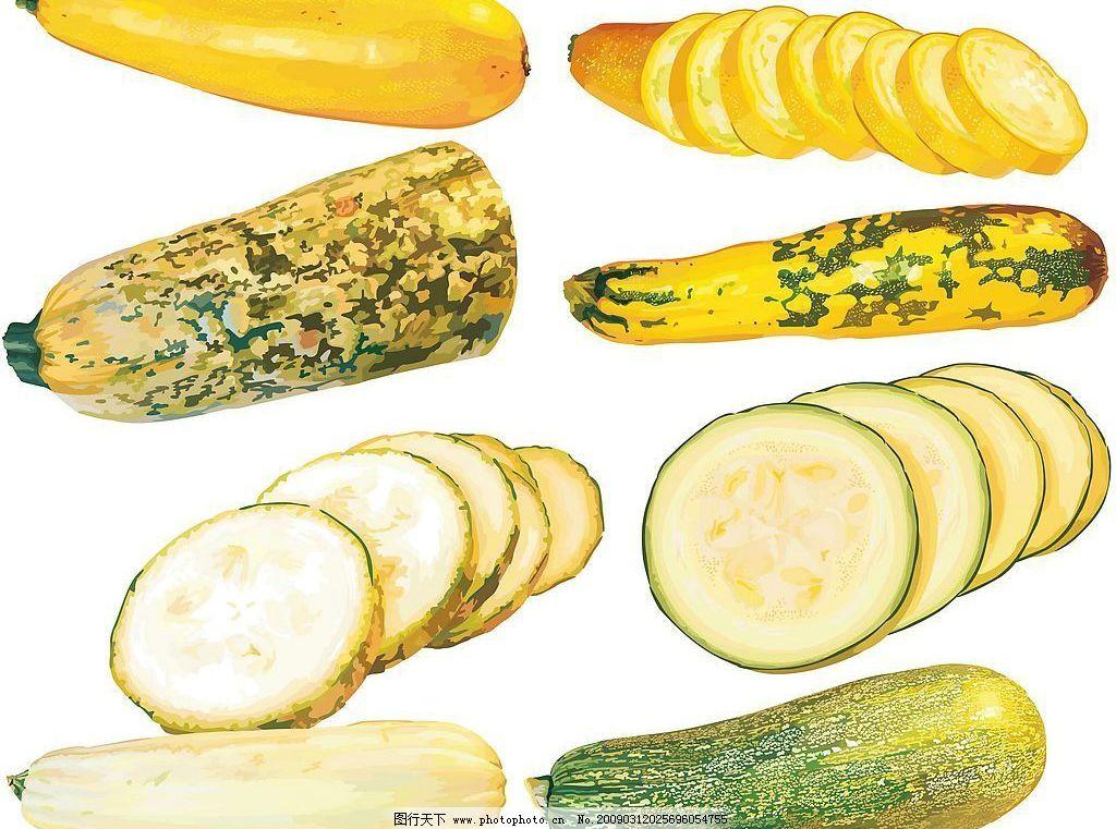木瓜和西葫芦矢量素材图片
