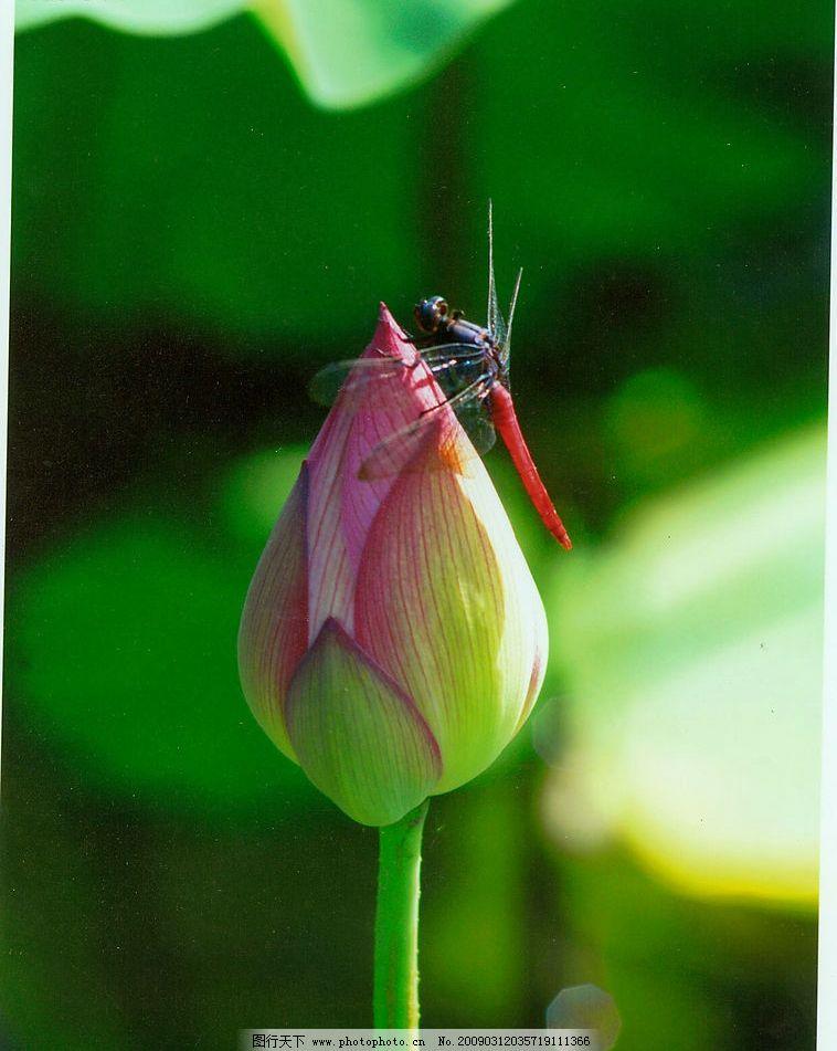 这个翡翠上雕的蜻蜓莲花还有可能是浪花的东西什么寓意图片