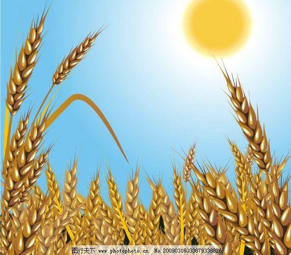 麦穗素材02图片