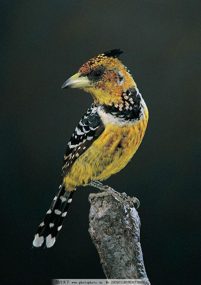 栖息图片,鸟 动物 飞鸟 国家保护 自然 物种 飞禽-图