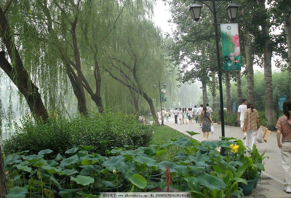 自然风景 荷花 花草 人物 树 走廊等 图片素材 背景素材 自然景观