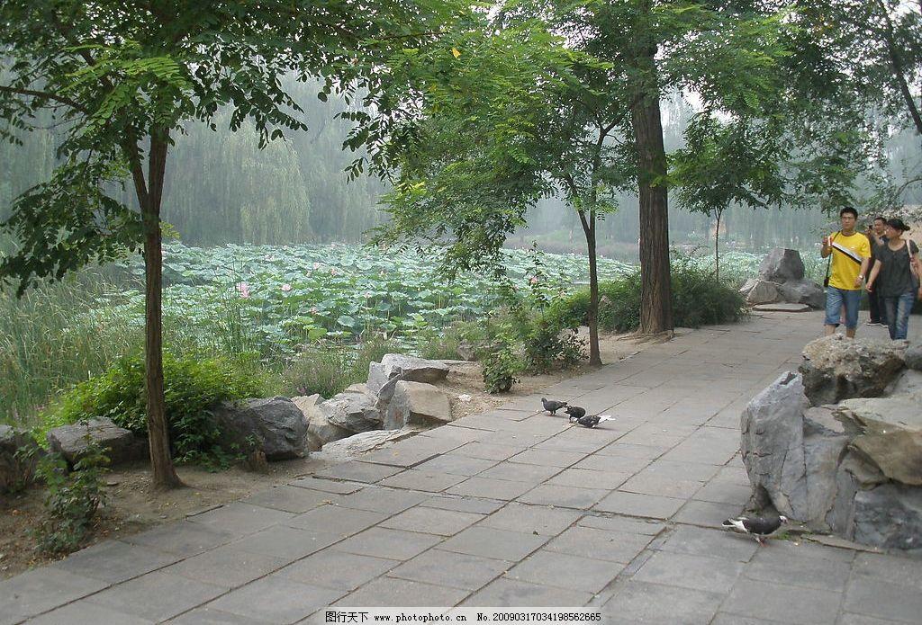自然风景 荷花 小鸟 人物 树等 图片素材 背景素材 自然景观 摄影图库
