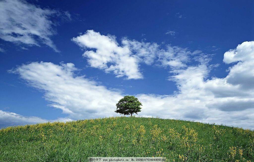 天空 蓝天 白云 草地 阳光 树木 自然景观 自然风景 摄影图库 72dpi