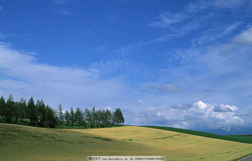 天空 蓝天 白云 草地 阳光 树林 自然景观 自然风景 摄影图库 72dpi