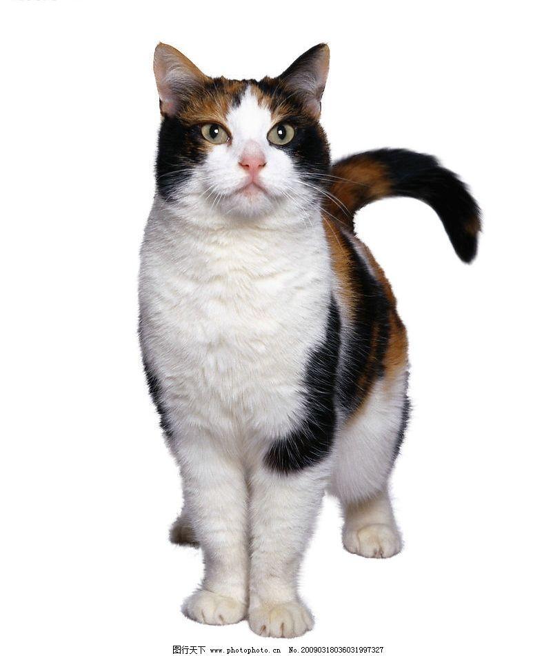 很可爱的猫的图