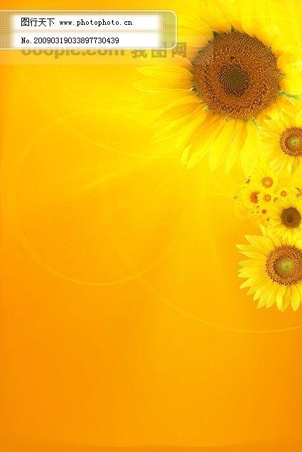 向日葵背景图片_其他图片素材_其他_图行天下图库