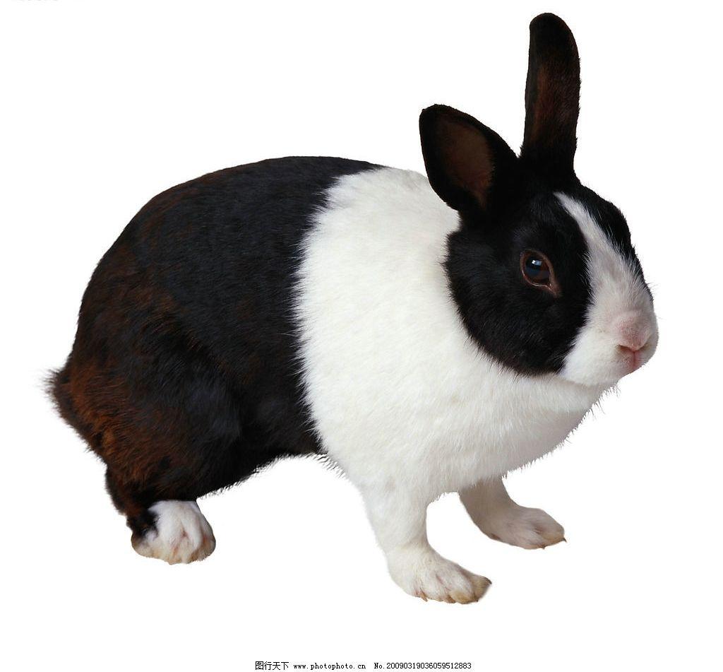 写意兔子画法步骤